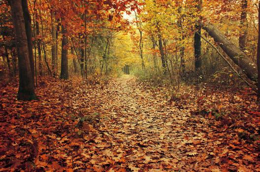 Autumn Walk CVIII.