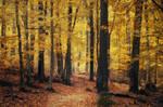 Autumn Walk CXXI.
