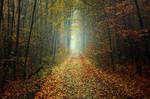 Autumn Walk CXLIII.