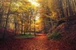 Autumn Walk CXLII.