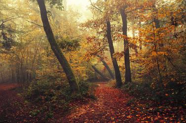 Autumn Walk CXL.
