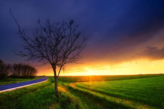 Stillness of the day