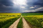 The Luminous Landscape XLVII.