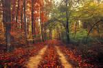 Autumn Walk CXXXII.