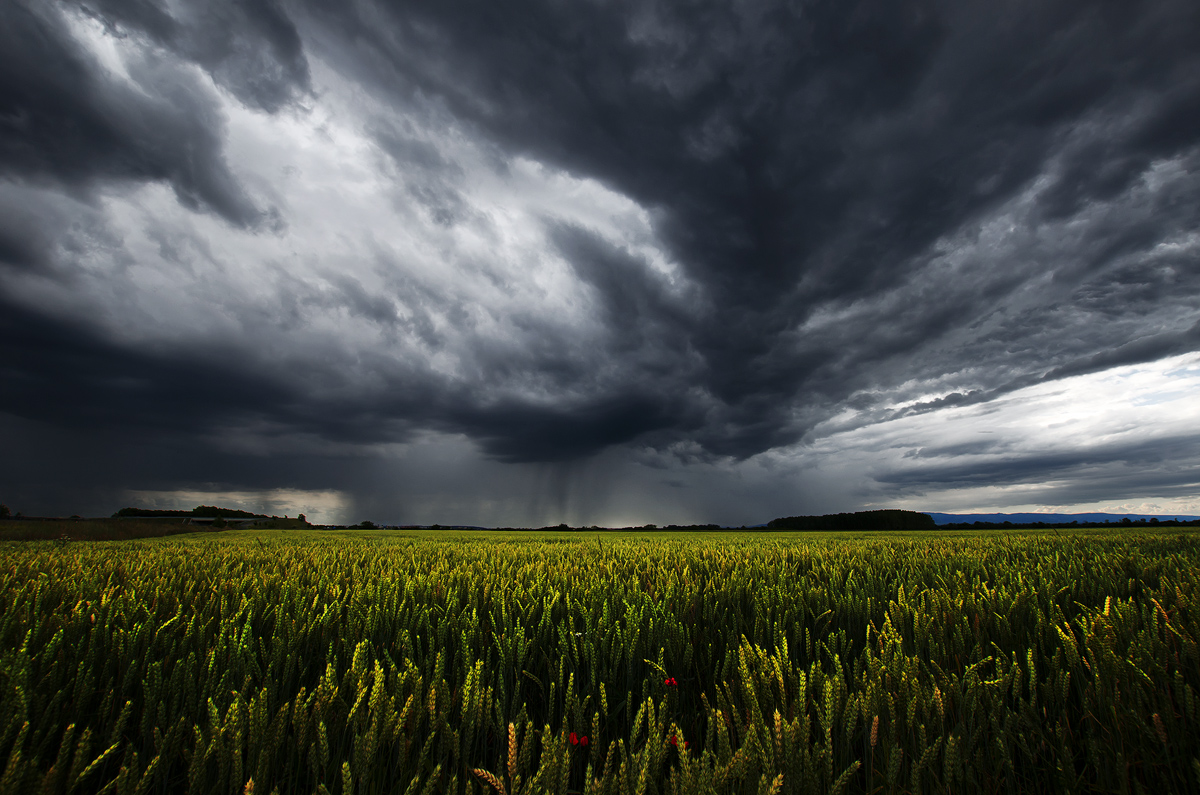 Storm Season V.