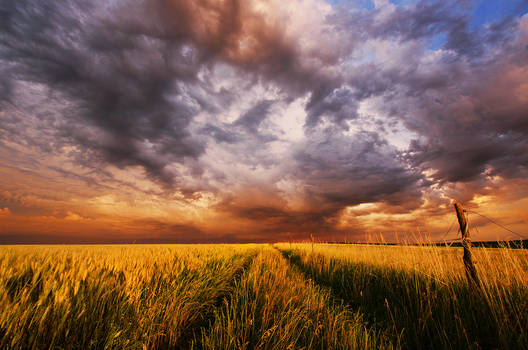 Hungarian countryside XIII.