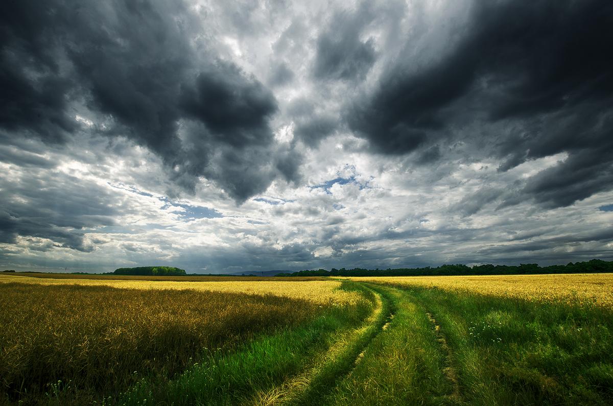 Hungarian countryside XX.