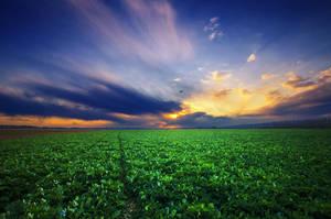 Hungarian countryside XI.