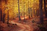 Autumn Walk CL.