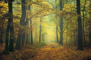 Autumn Walk CLI.