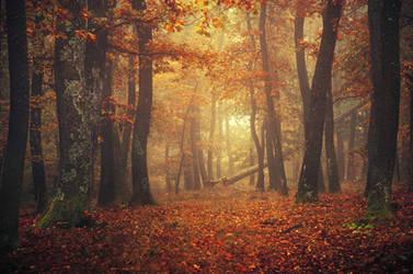 Fall Impressions XIII.