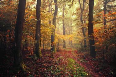 Autumn Walk CLVII.