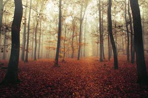Autumn Walk CLXIX.
