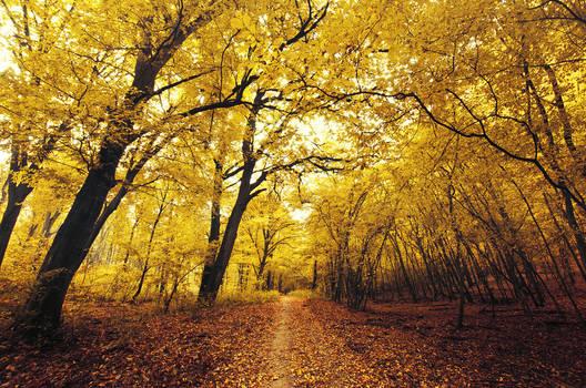 Autumn Walk CLII.