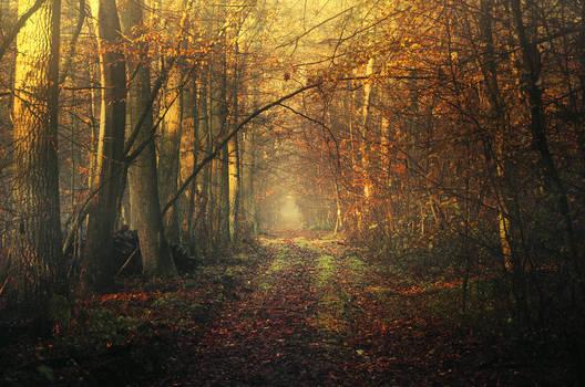 Autumn Walk CLXXXI.