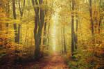 Autumn Walk CLXIII.