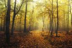 Autumn Walk CXCI.
