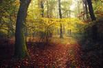 Autumn Walk CXCVII.