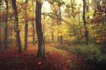 Autumn Walk CC.