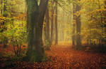 Autumn Walk CXCIV.