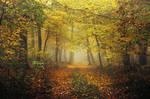 Autumn Walk CLXXXIX.