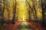 Autumn Journey XXXIII.