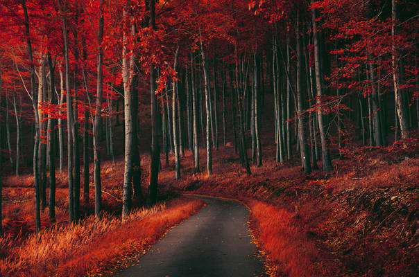 Red Forest XV.