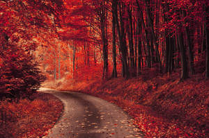 Red Forest XXII.