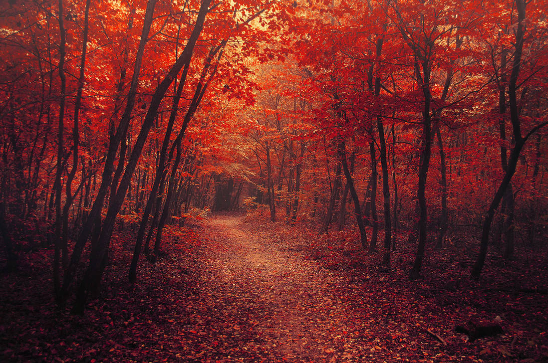 Red Forest X.