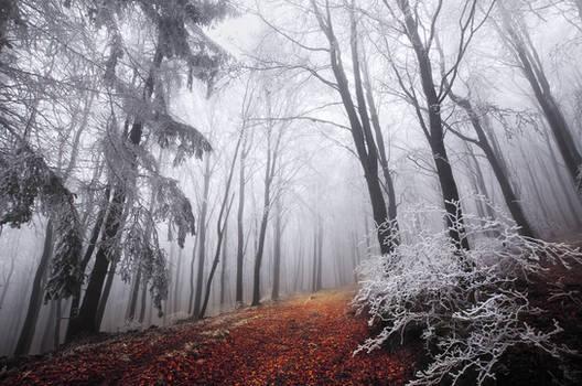 Winter Woods XXI.