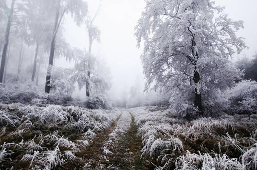 Winter Wonderland VIII.