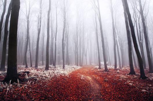 Winter Woods XIX.