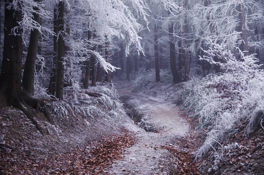 Wonders of Winter II.