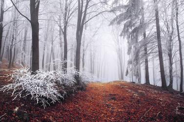 Winter Woods XX.