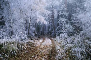 Wonders of Winter I.