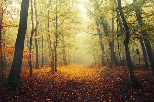 Autumn Walk CCXIII.