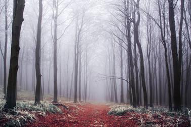 Winter Woods XXVIII.