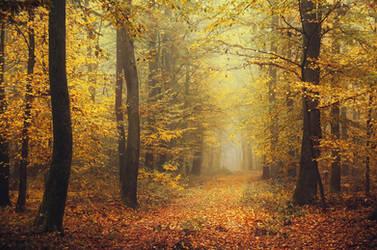 Autumn Walk CCXIX.