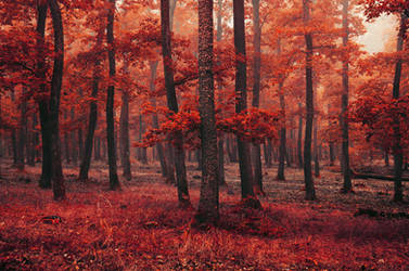 Red Forest XIII.