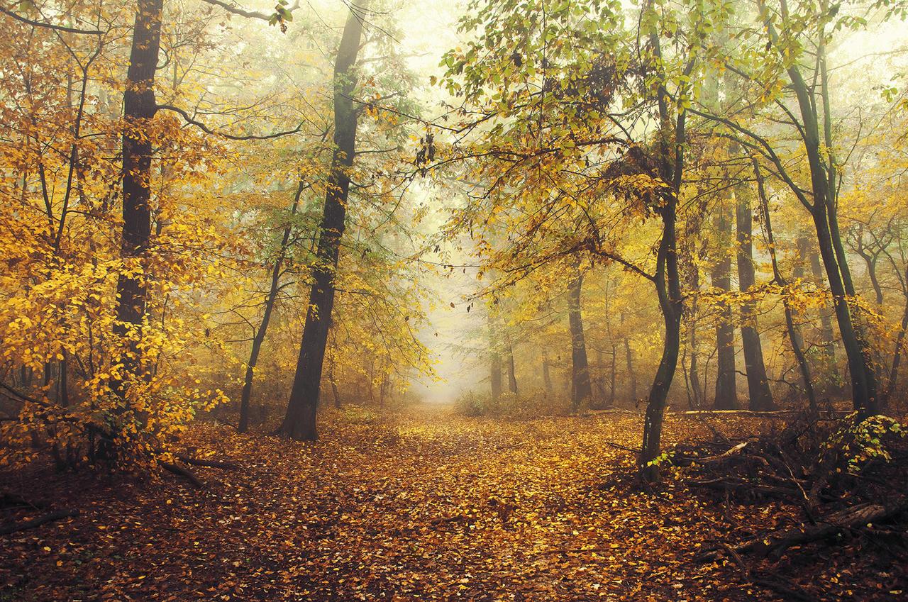 Autumn Walk CCXVI.