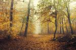 Autumn Walk CCXVI. by realityDream