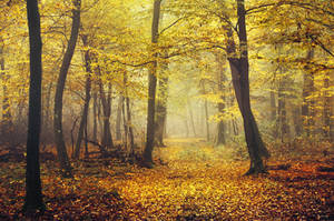 Autumn Walk CCXVII.