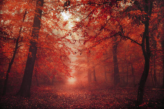 Red Forest XVI.