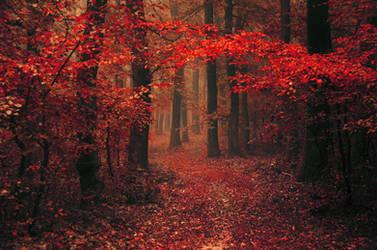 Red Forest XXIII.