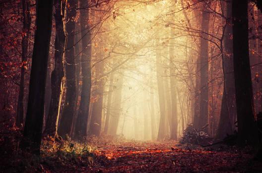 Fading Autumn XI.