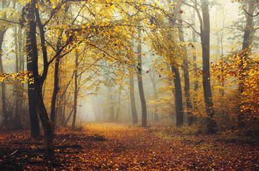 Autumn Walk CLXXXV.
