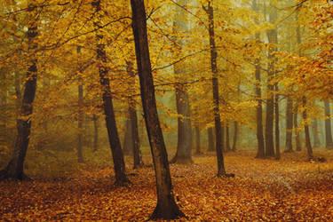 Autumn Walk XCVI.