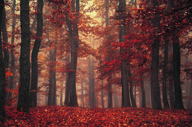 Red Forest XXVI.