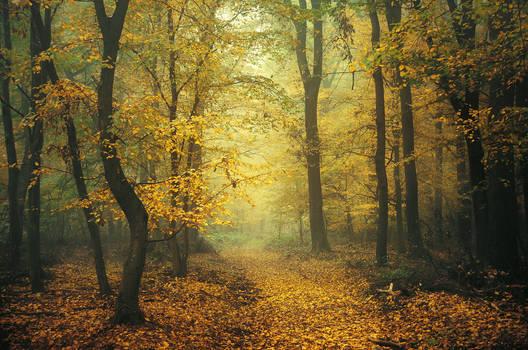 Autumn Walk CCXII.