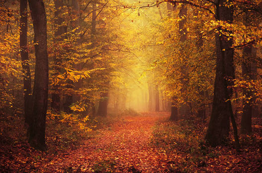 Autumn Walk LXXI.